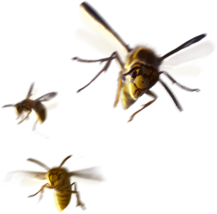 Three bees
