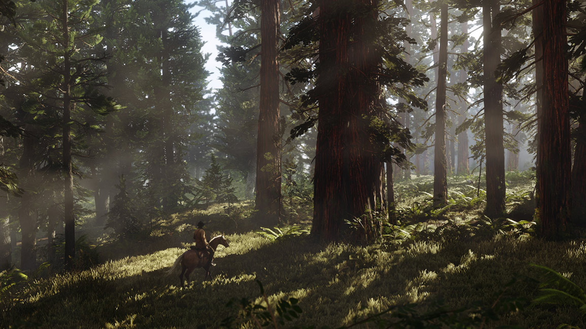 A cavalo pela floresta