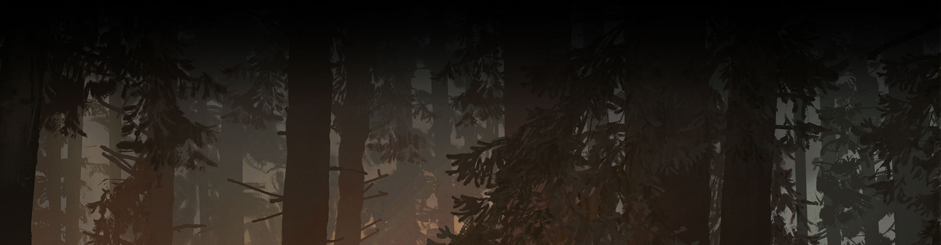 Background of shadowy trees in a forest